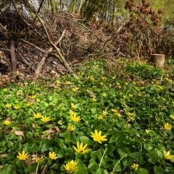 Haie de bois mort, végétation spontanée